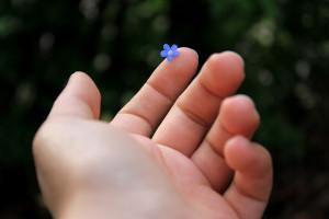 Fiore con mano