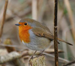 Fotografare uccelli