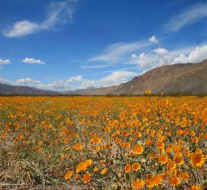 Campo di fiori e montagna
