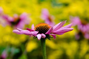 Fiore allo stesso livello